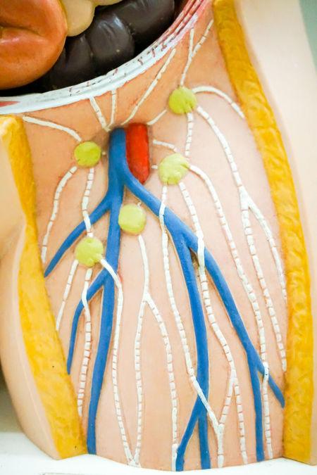 Arteries of the leg for medical education purpose Artery Body & Fitness Leg Science Vein Anatomy Angioplasty Art Arterial Biology Blood Diagram Education Femora Femur Health Hip Human Body Part Inside Internal Medical Nerve System Theraphy