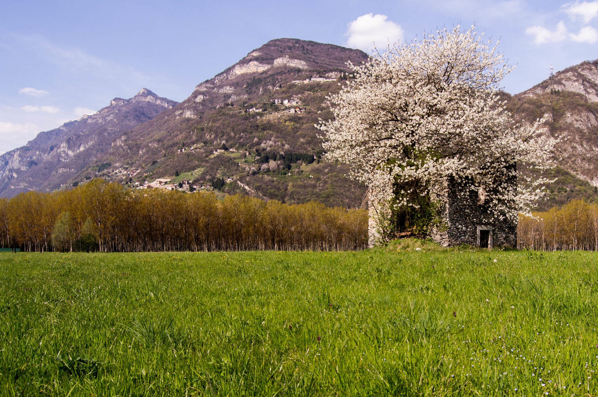 Landscapes With WhiteWall La riconquista del fiore!