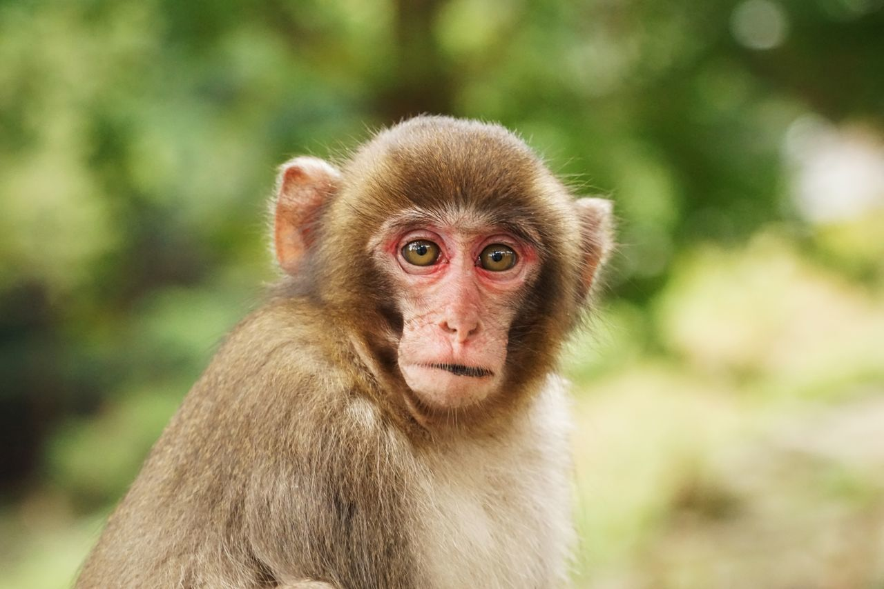 Beautiful stock photos of monkey, Animal Themes, Animal Wildlife, Animals In The Wild, Close-Up