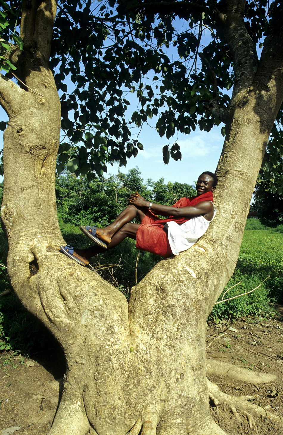 Adult Adults Only Baobab Baobab Tree Branch Branches Day Full Length Guinea Leaves Leisure Activity Lifestyles Man Man In Tree  Man Resting Nature Outdoors People Real People Sky Split Trunk Tree Trunk