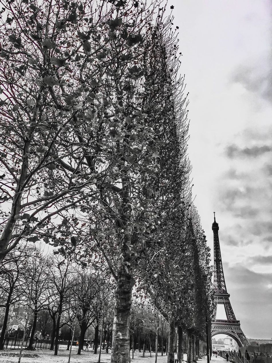 Tree Sky Branch Outdoors Architecture Cold Temperature Winter Eiffel Tower IPhoneography Iphonephotography
