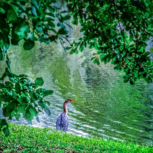 Contemplating the meaning of life. Nature Water Reflections Things With Wings  Streamzoofamily