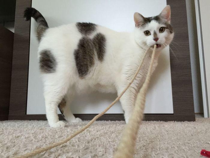 Pet Portraits Cat I Love My Cat Animal Themes Animal Photography Cat♡ Cat Lovers Cats Of EyeEm