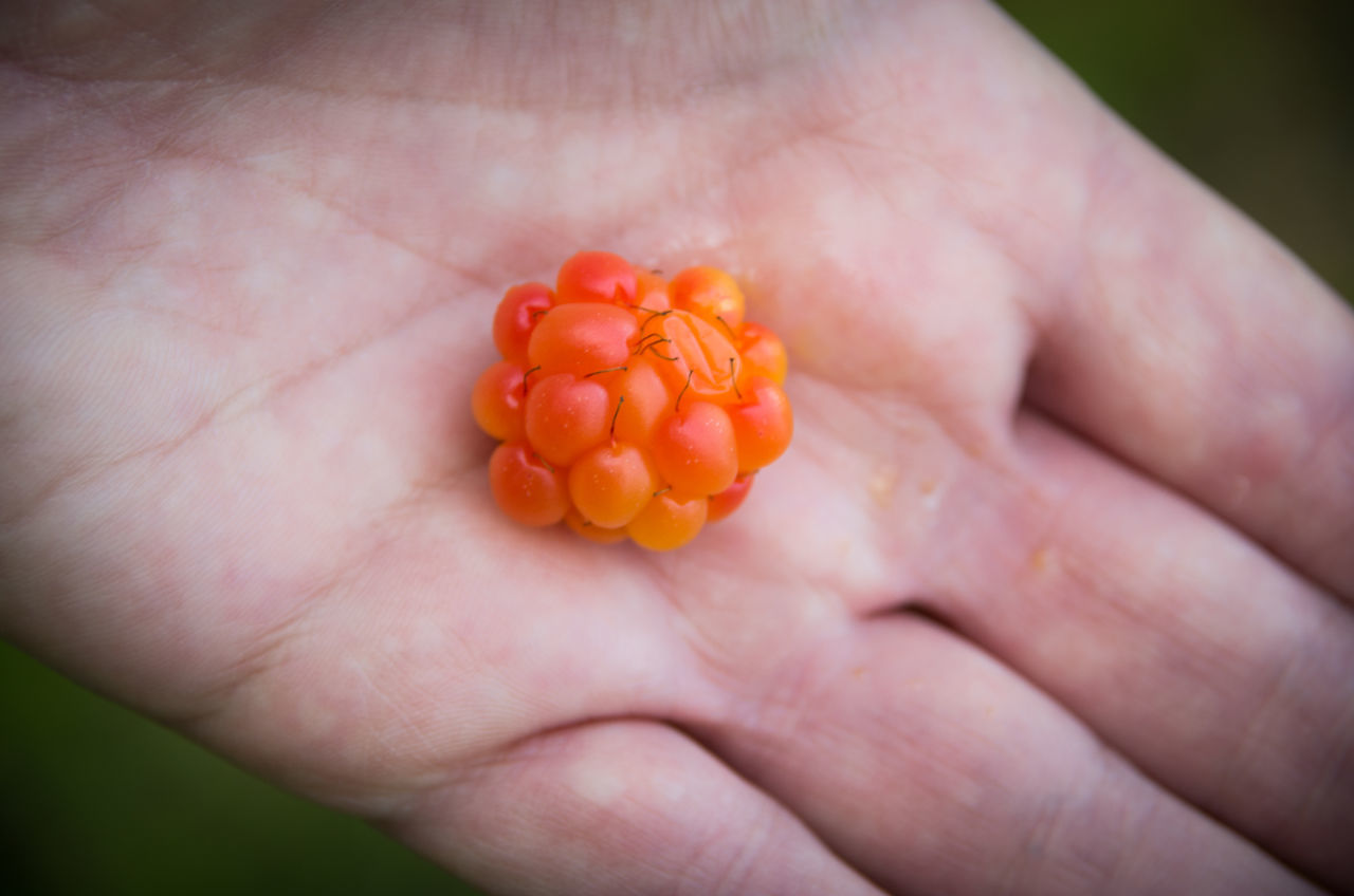 Beauty In Nature Berries Berry Close-up Cloudberries Cloudberry Freshness Freshness Hand Hjortron Orange Color Personal Perspective Rubus Chamaemorus Summertime