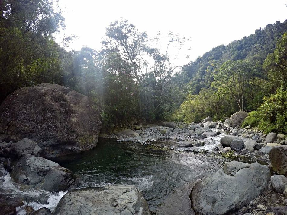 River Water Forest Tranquility Beauty In Nature Nature Flowing Water Tranquil Scene Tranquility Non-urban Scene Flowing Stone Goprouniverse GoPrography Goprophotography Gopro Shots Goprohero4 Gopro Colombia