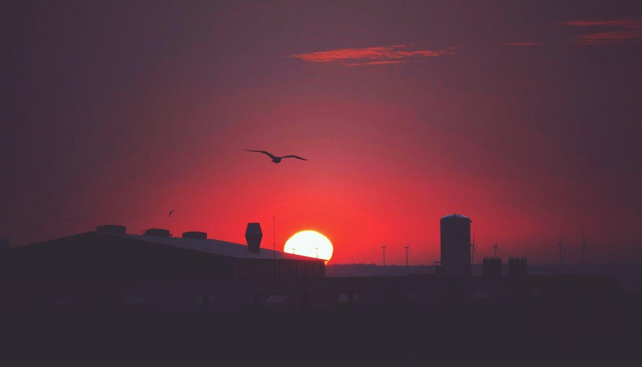 Birdwatching Sunrise... Silhouette Beauty In Ordinary Things