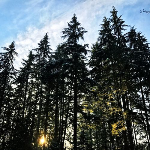 Nature Forest Beauty In Nature Sky Scenics Outdoors EyeEmNewHere WoodLand Beautiful Forrest Photography Walk In The Woods Cedars Canada Eh! Growth Tall Trees Life Old Clean Air Woods Beauty In Nature Nature Lover Outside Get Outside Forrestmagic