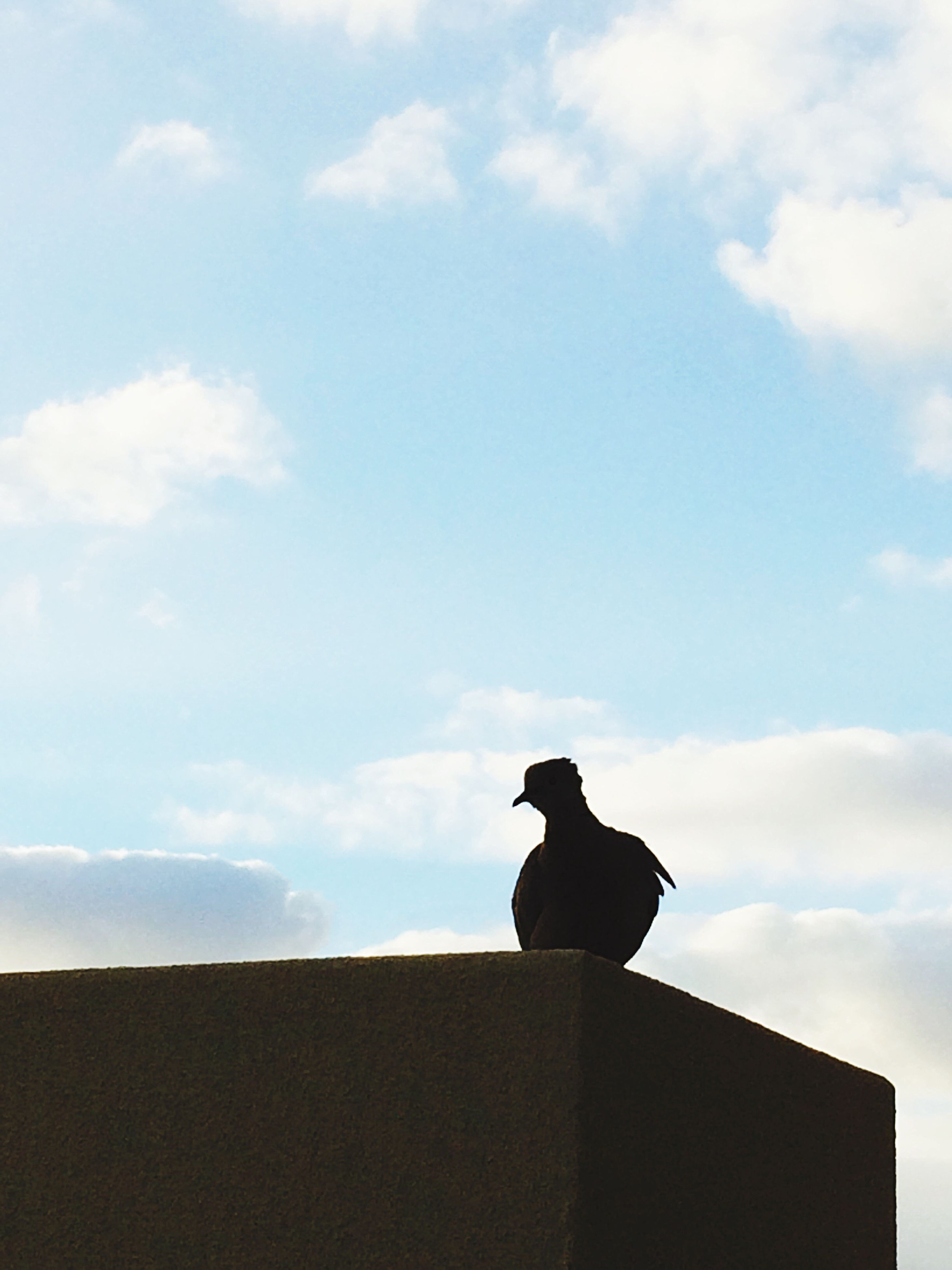 sky, animal themes, silhouette, one animal, low angle view, cloud - sky, cloud, statue, sitting, mammal, animals in the wild, sculpture, wildlife, animal representation, roof, outdoors, nature, cloudy, on top of, built structure