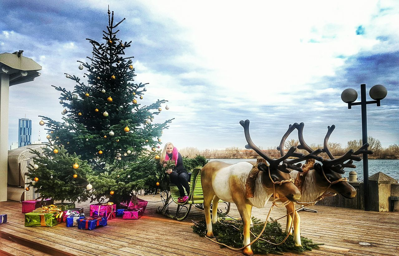 Christmas Christmas Tree Tree Christmas Decoration Celebration Christmas Ornament Christmas Lights Tradition Deers Santa Is On The WayHoliday - Event Vacations Illuminated Sky Outdoors Day Vienna Cloudy Day Winter Time Cold ❄