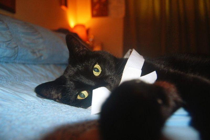 One of my Three beautiful kitties💘😺 Cat Beautiful Animal Shot Photography Animal Photography Animal Portrait Model