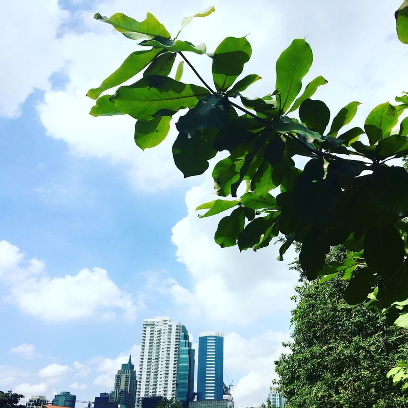 Sky Tree Growth Leaf Low Angle View Cloud - Sky Day Architecture Outdoors Building Exterior No People Built Structure Green Color Skyscraper Nature City