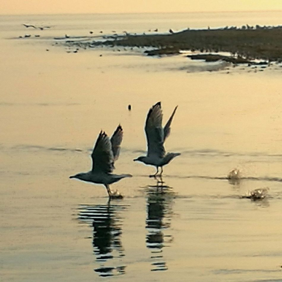 Spread Wings Flying Bird Animal Themes Water Animals In The Wild Wildlife Flying Spread Wings Beach Tranquility Togetherness Shore Seagull Sea Tranquil Scene Scenics Nature Vertebrate Non-urban Scene Dusk Zoology