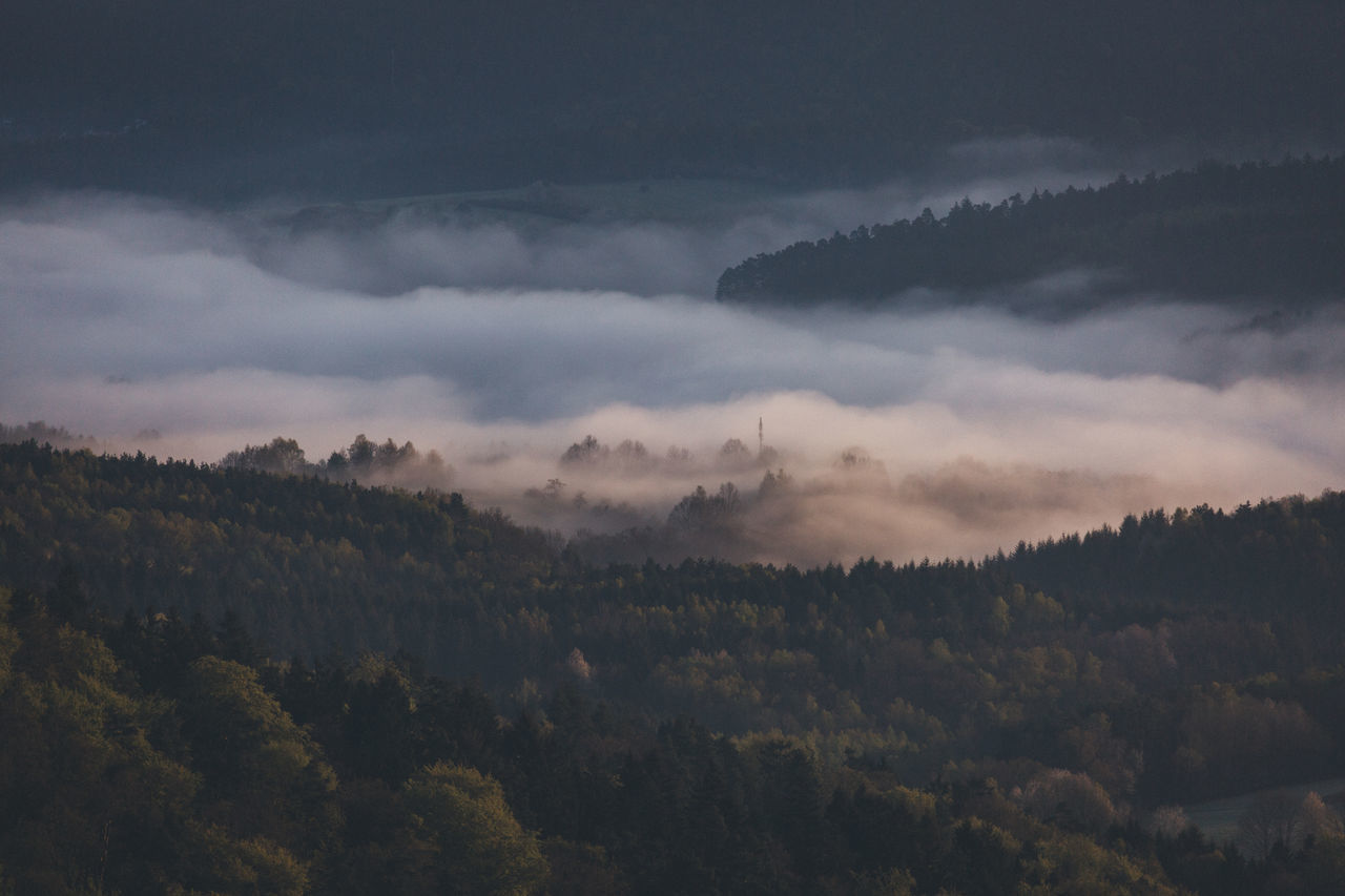 Beautiful stock photos of germany, Beauty In Nature, Day, Fog, Foggy