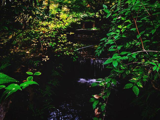 Light and shadow EyeEm Best Shots - Nature ShotOnIphone Youmobile MWJP Mobilephotography