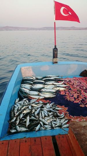 Fish Water Sea No People Outdoors Nature Sky Sun Clouds And Sky Sea And Sky Pasalimaniadasi Day Fishing