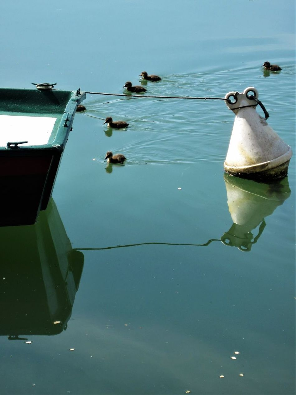Animal Themes Buoy Day Ducklings Floating On Water Mode Of Transport Nature Nautical Vessel No People Outdoors Reflection River Transportation Water Water Wings Waterfront