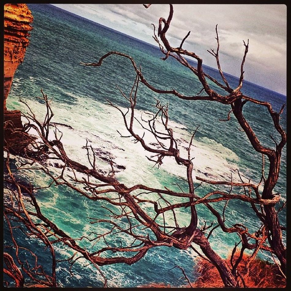 Dead Tree Great Ocean Road Rock Sea Beach Waves Breaking Australia Beautiful Visitvictoria Victoriassecret Port Campbell National Park 12 Apostles Shipwreck Lochardgorge