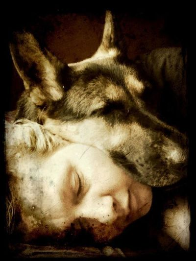 Lyca Pet Portraits Animal Head  Animal Themes Close-up Day Dog Domestic Animals Eyes Closed  Indoors  Lying Down Mammal No People One Animal Pets Sleeping Rethink Things