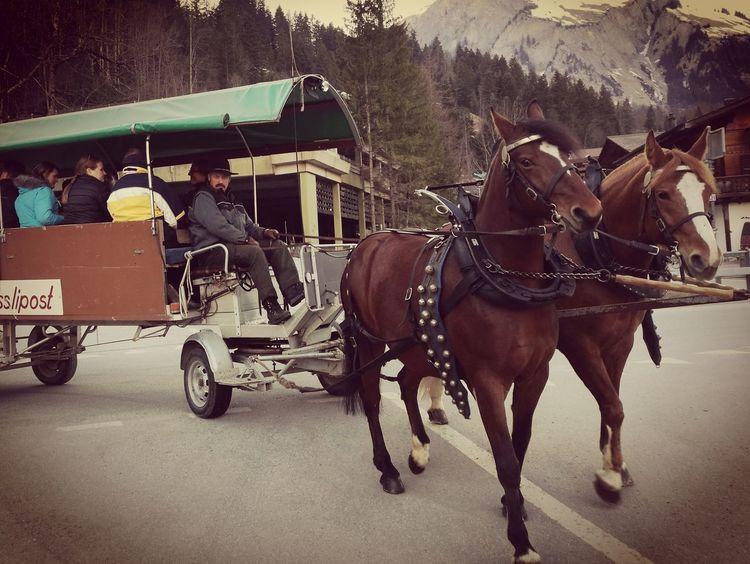 Horse Cart Swiss Alps Lenk