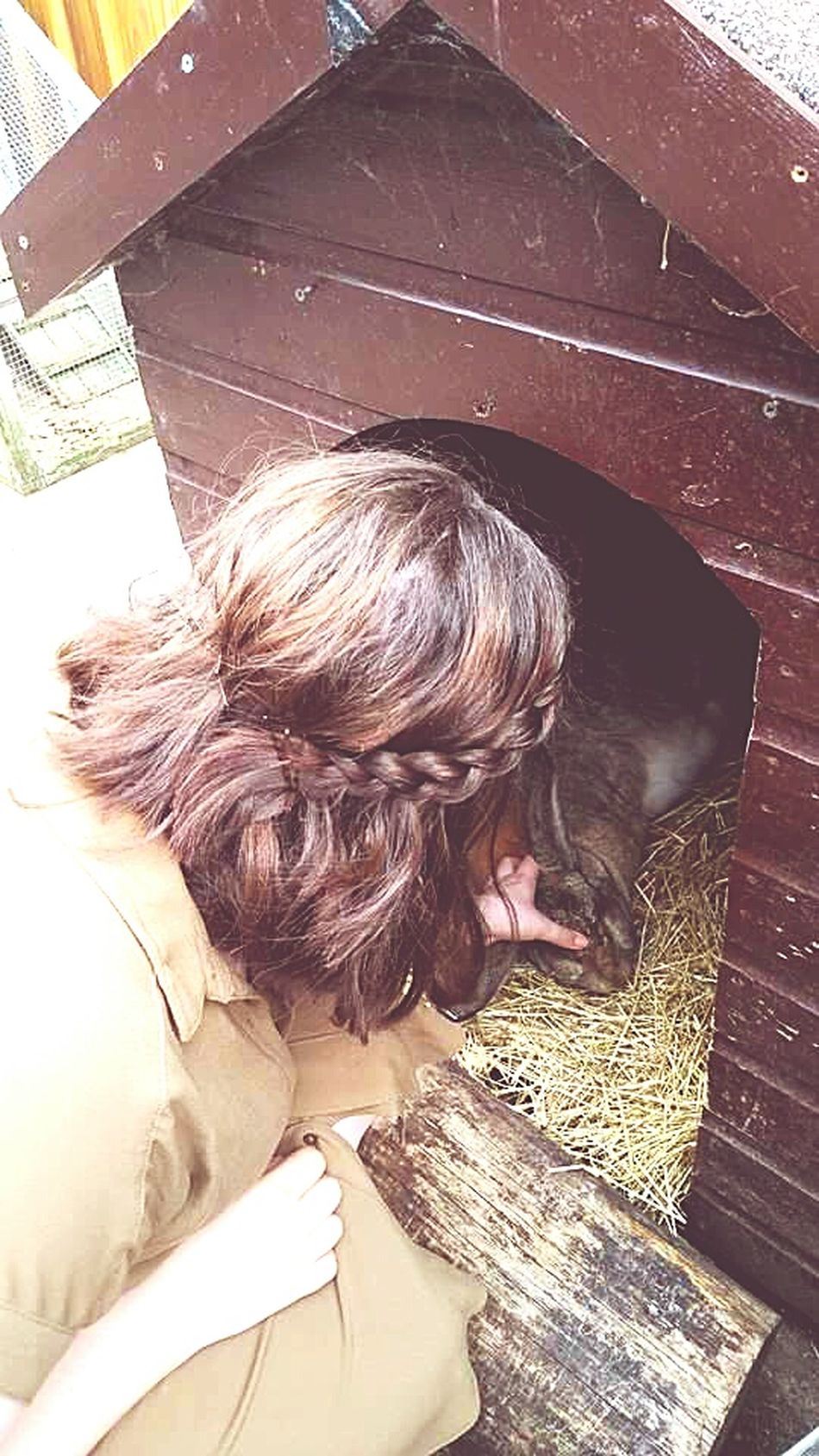 I played with a giant rabbit today. Then washed my hand a zillion times Rabbit Petting Zoo Five Sisters Zoo Zoo Giant Rabbit Day Out Aunty Short Hair Plait Good Hair