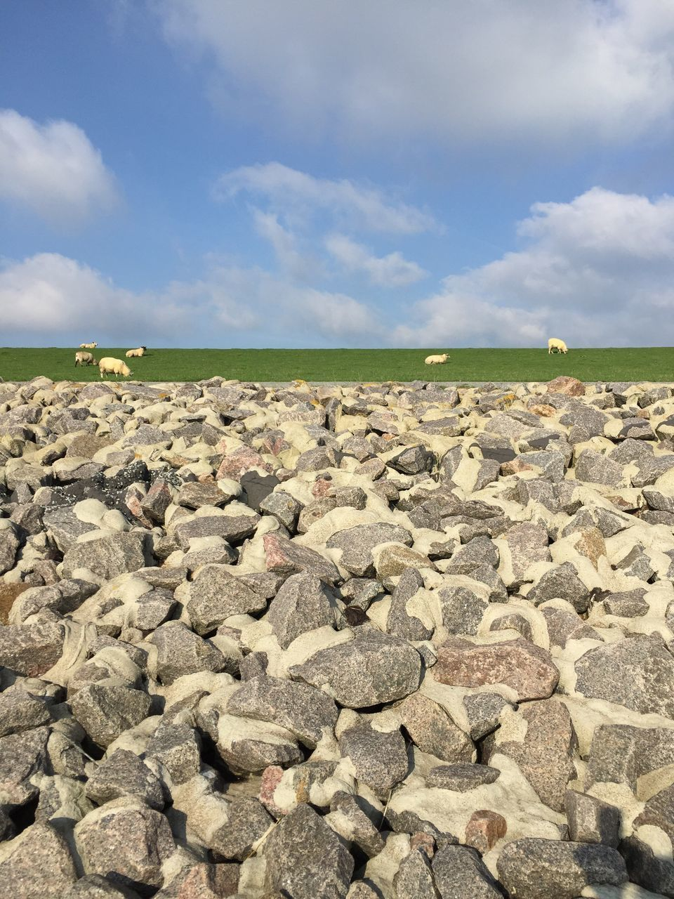 Sheep On Field Against Cloudy Sky With Rocks In Foreground