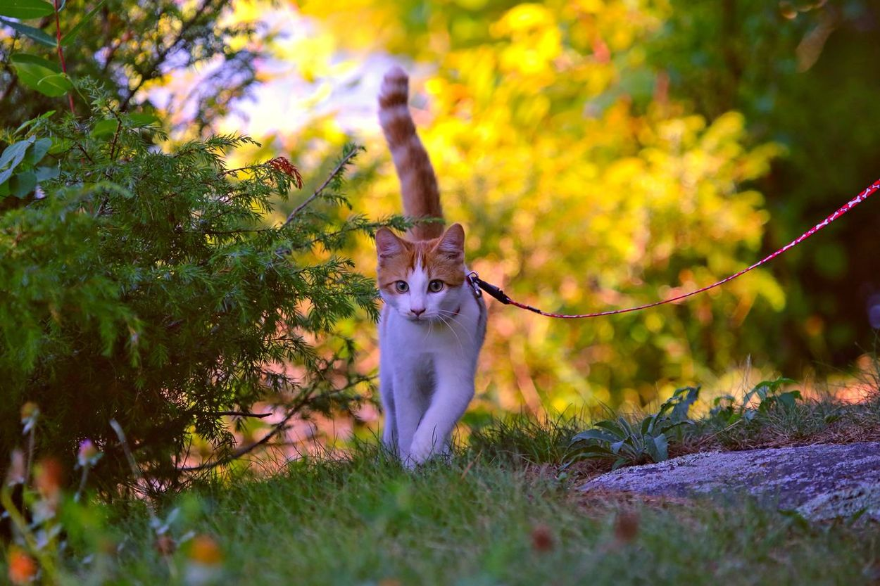 Awesomeness Best Cat Ever I Am Groot Pet Portraits Animal Themes Animal Wildlife Beauty In Nature Day Domestic Animals Domestic Cat Feline Full Length Looking At Camera Mammal Nature No People On A Leash One Animal Outdoors Pets Plant Portrait Tree Young Animal