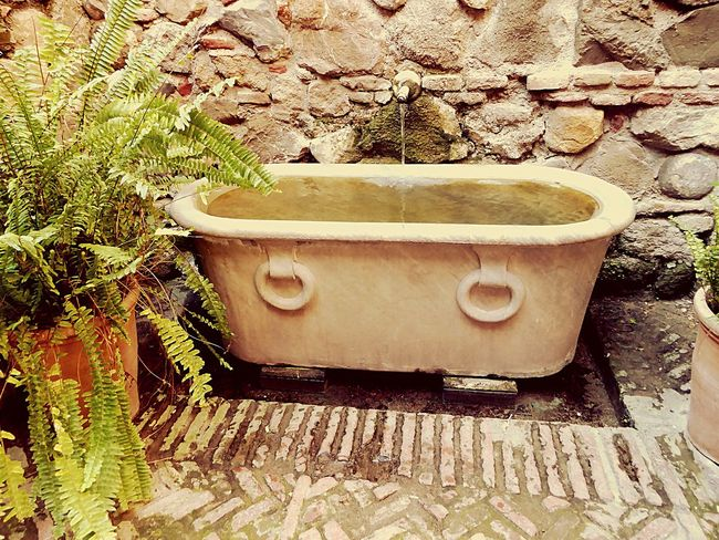 Malaga Terrasse Garden Old Castle Roman Bath Check This Out Malaga City Life Things I Like EyeEm Gallery Welcome To My World Discover The World 43 Golden Moments Feel The Journey Feel The Moment