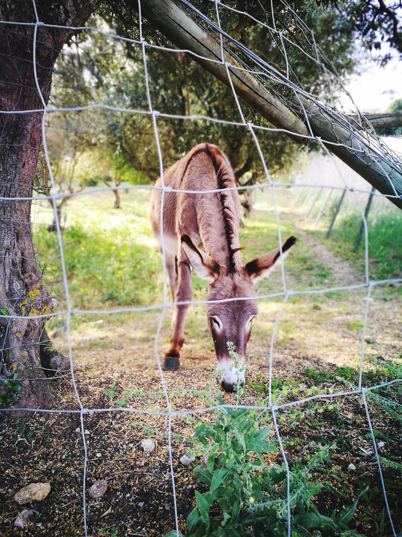 Rural Scene Animal Wildlife One Animal Animal Themes Animals In The Wild Cage No People Eating Tree Nature