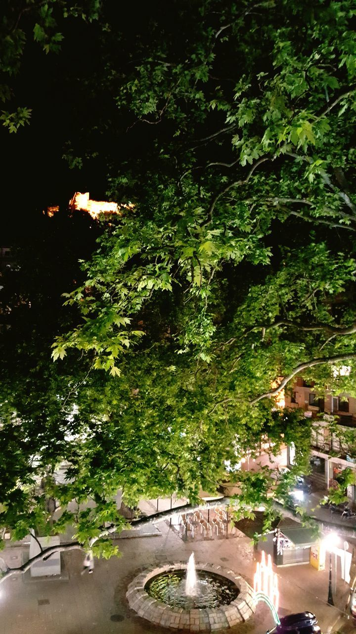 tree, growth, no people, outdoors, nature, plant, night, architecture, illuminated, water