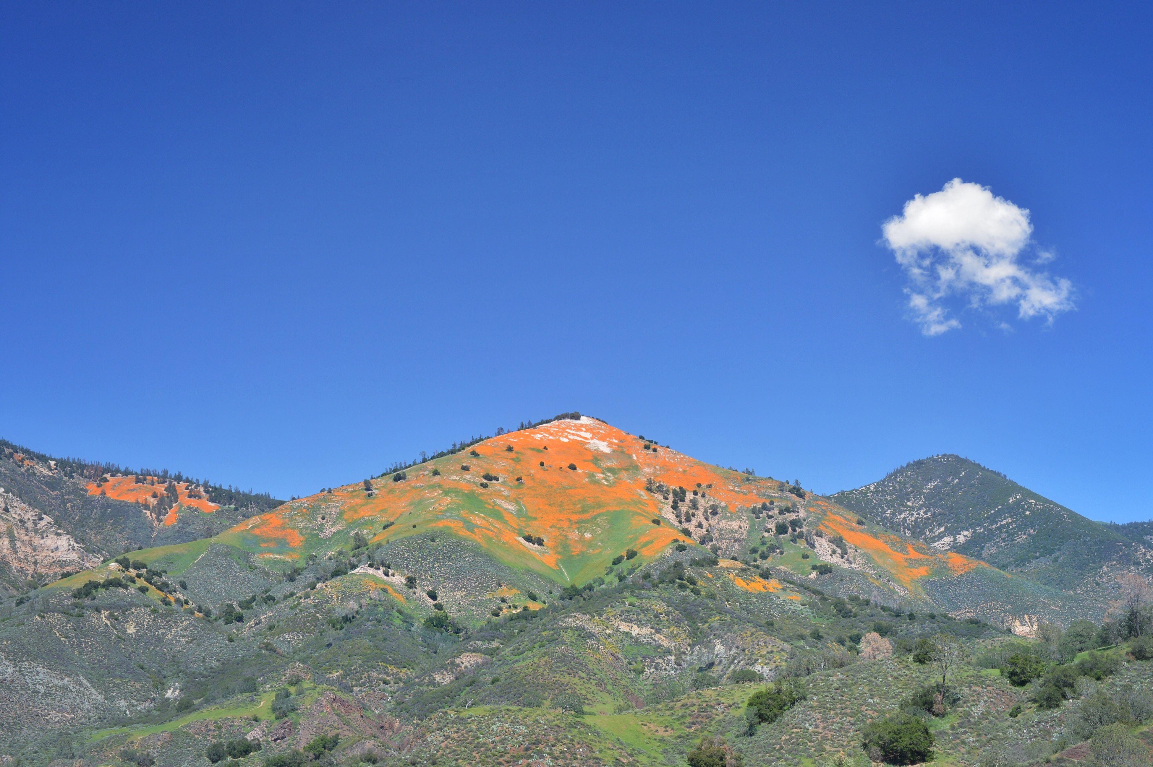 Fresh Poppies  Mountains Mountain View Figueroa Mountain