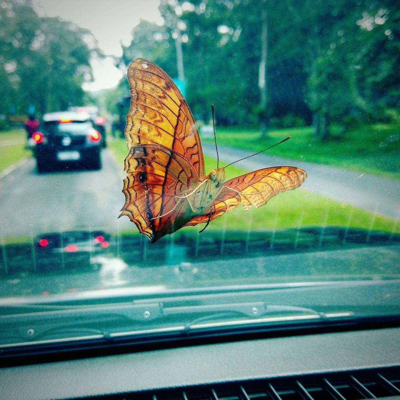 Butterfly 😃