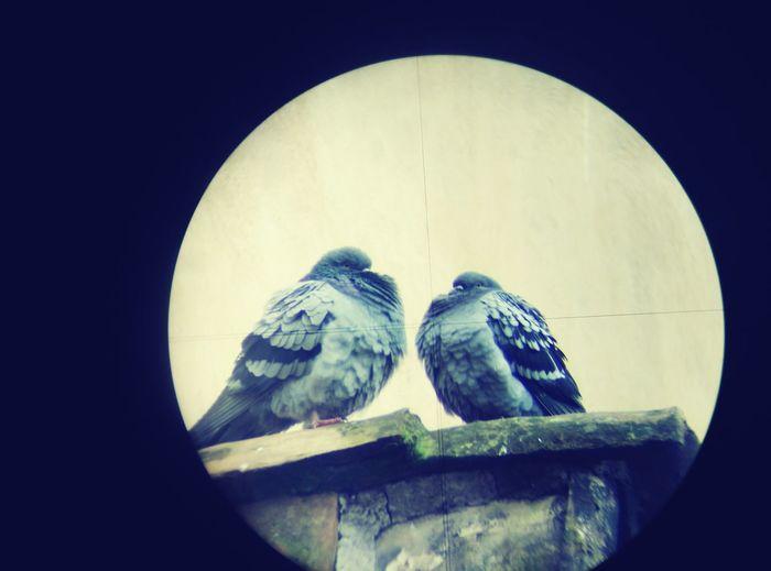Dai tesoro non fare così... Bird Photography Walking Around Birdwatching Roma