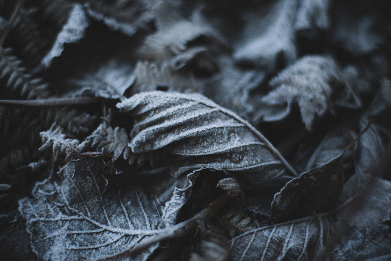 Winter. Close Up Close-up Frost Frosty Mornings Frozen Frozen In Time Frozen Nature Leave Leaves Leaves On The Ground Leaves Only Leaves Moody Soothing Soothing To The Soul Still Life Stillness Textured  Textured  Textures And Surfaces Winter Wintertime