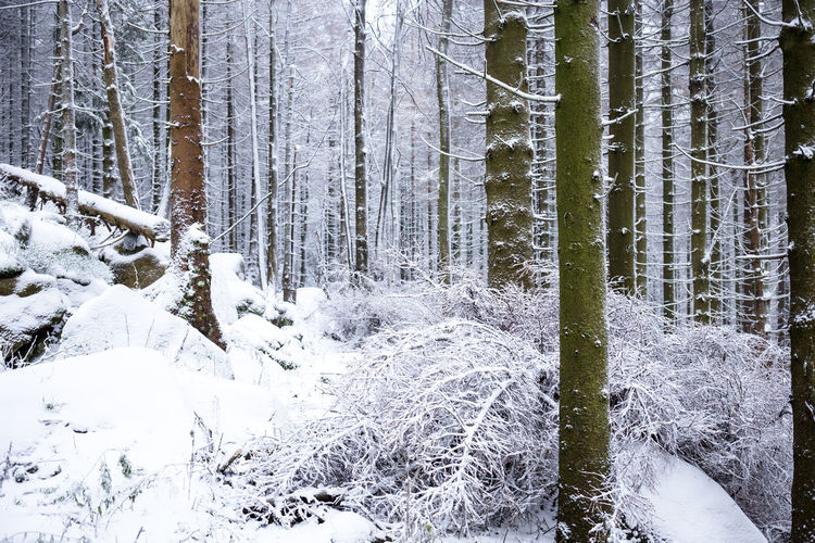 winter with snow in nature ExploreEverything Germany🇩🇪 Beauty In Nature Cold Temperature Day Forest Growth Landscape Nature Neverstopexploring  No People Outdoor Photography Outdoors Scenics Snow Tranquil Scene Tranquility Tree Tree Trunk Wald Waldlandschaft White Color Winter