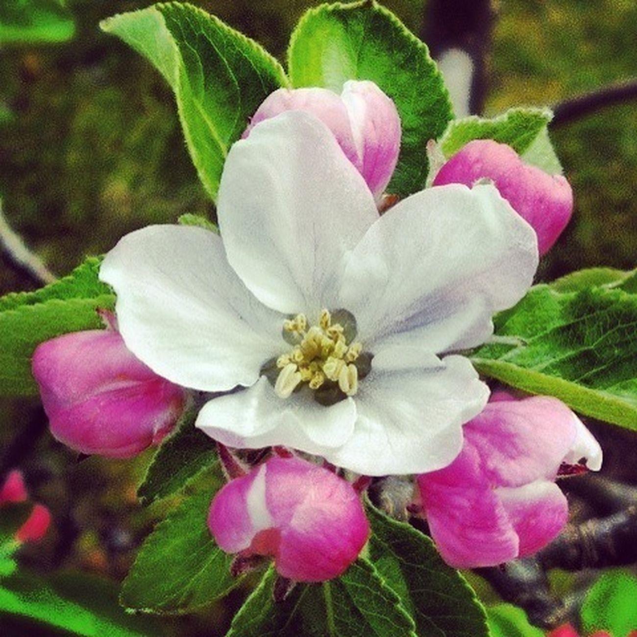 #flower#garden#nature#ecuador#santodomingoecuador#eyeEmfollowers#iphoneonly#nofiltrer#macro_garden#pretty#beautiful#followme#shooters#sun#sky#hojas#eyeEm#macro#eyeEmaddictic#daily#picoftheday#photooftheday#bestflower#bestshoot