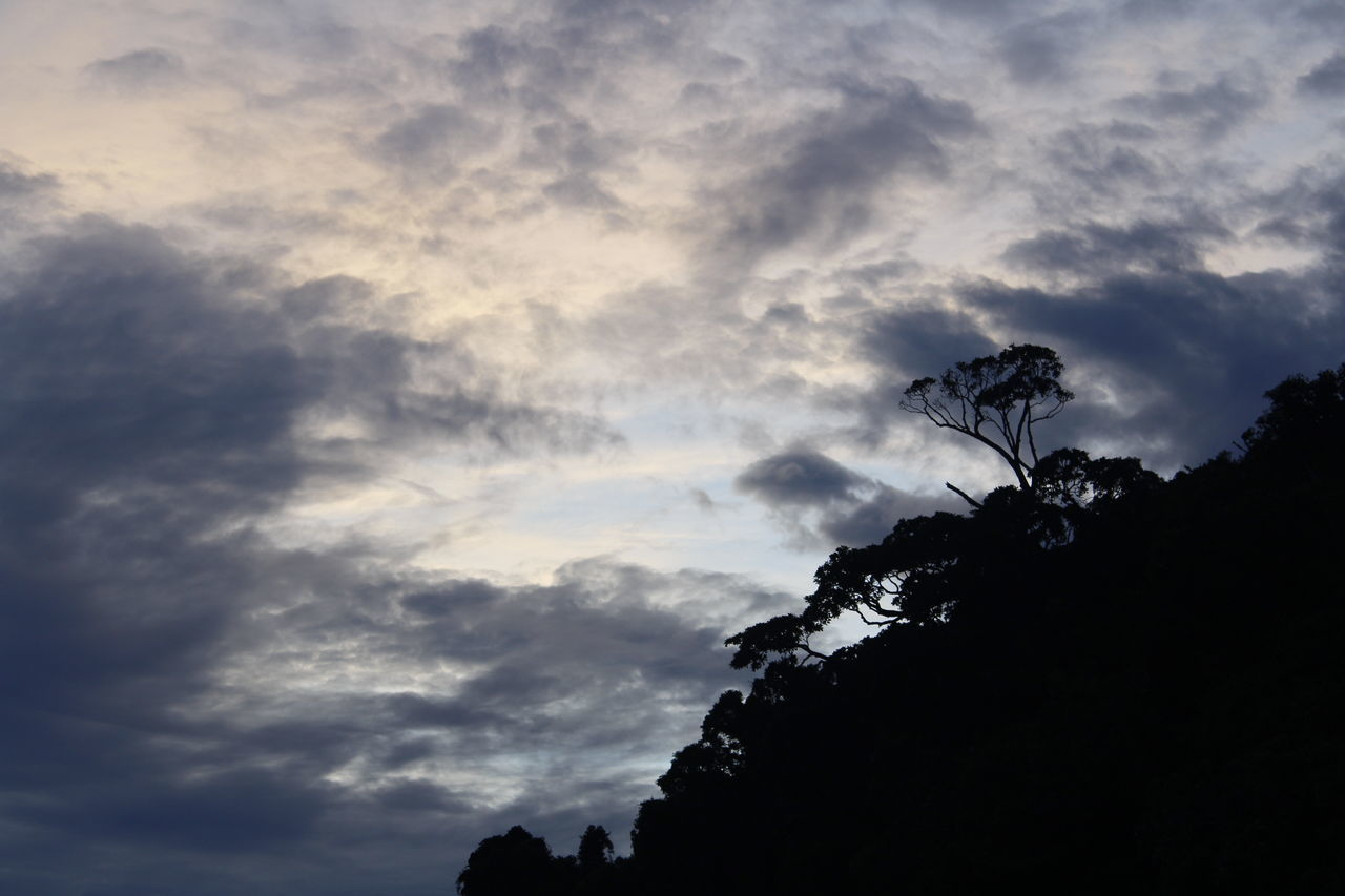 low angle view, cloud - sky, sky, silhouette, tree, nature, beauty in nature, no people, outdoors, day, scenics, tranquility