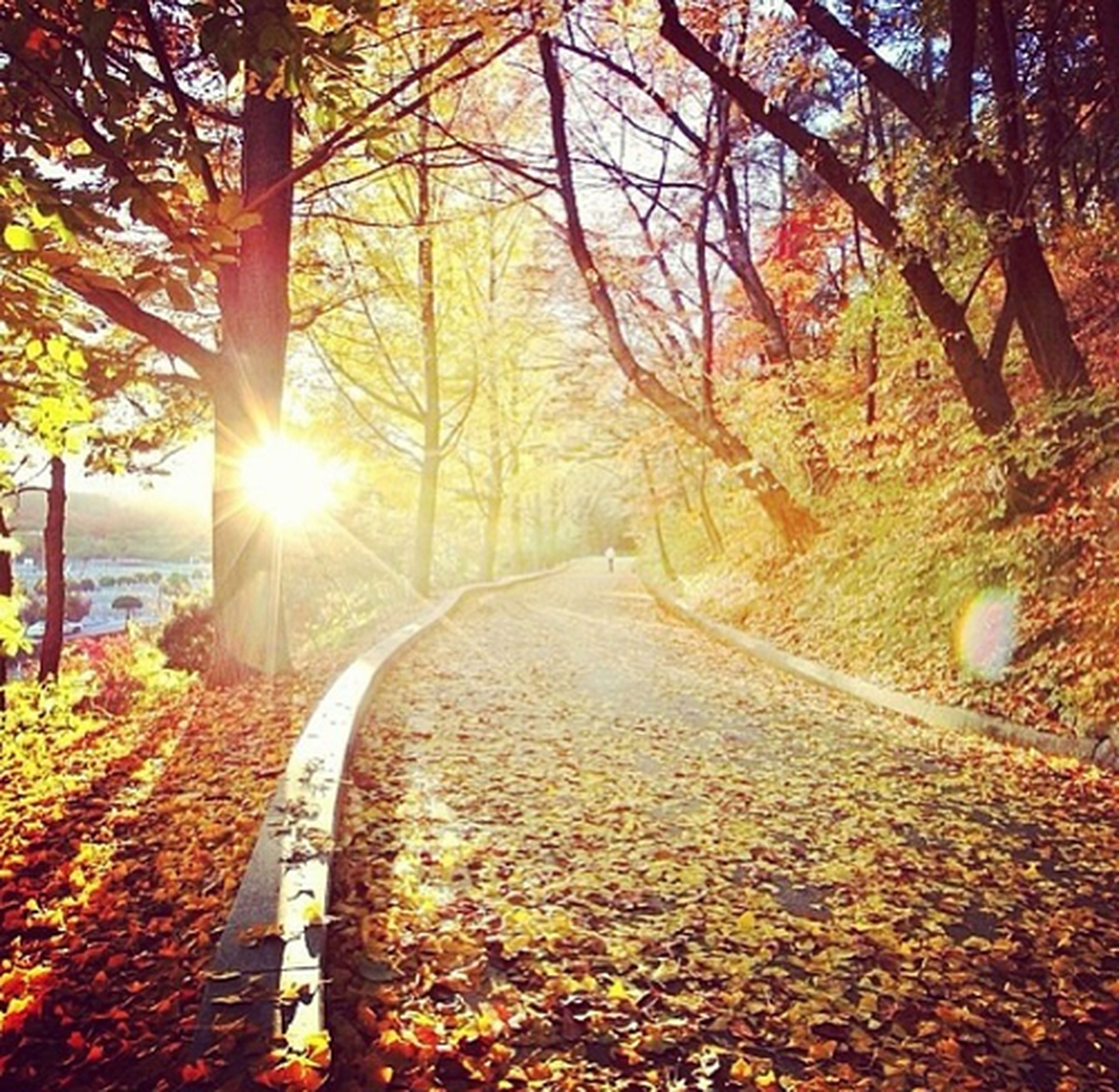 sun, tree, sunbeam, the way forward, sunlight, tranquility, lens flare, tranquil scene, sunset, nature, diminishing perspective, scenics, transportation, beauty in nature, forest, landscape, road, vanishing point, non-urban scene, autumn