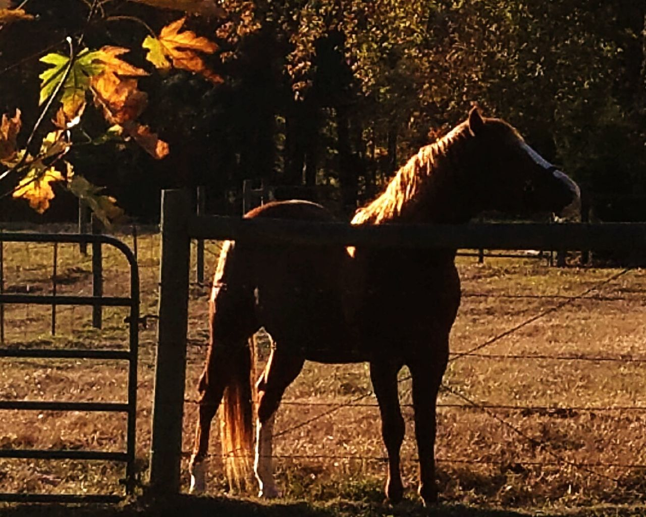 Horse Beauty In Nature Outdoors Paddock Day Texas!!!! Texaslife Therapy Horses Ranch Life Tennessee Walker EyeEmNewHere