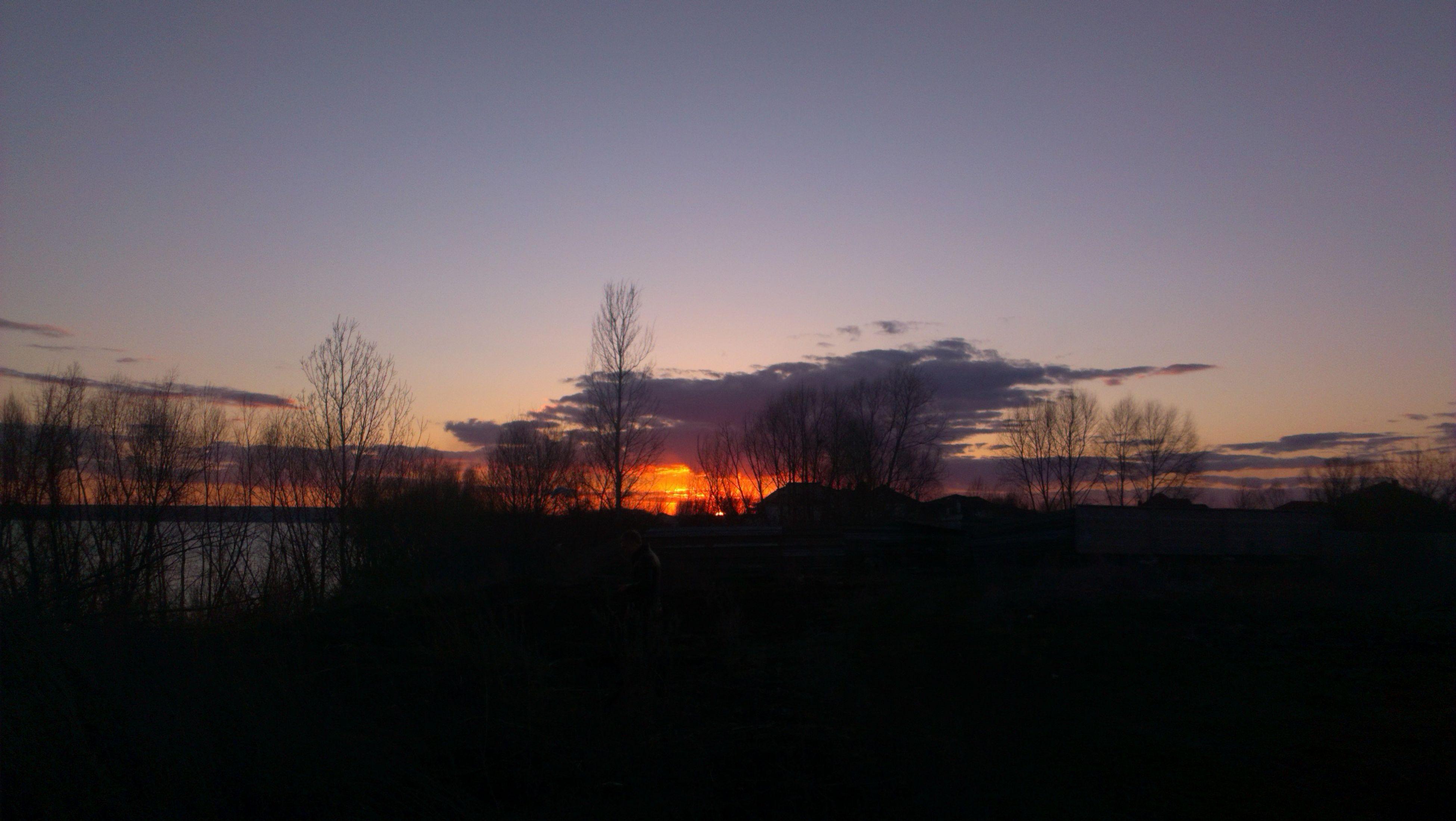 sunset, silhouette, tranquil scene, copy space, tranquility, scenics, clear sky, bare tree, beauty in nature, landscape, orange color, nature, dark, tree, sky, sun, idyllic, dusk, field, outline