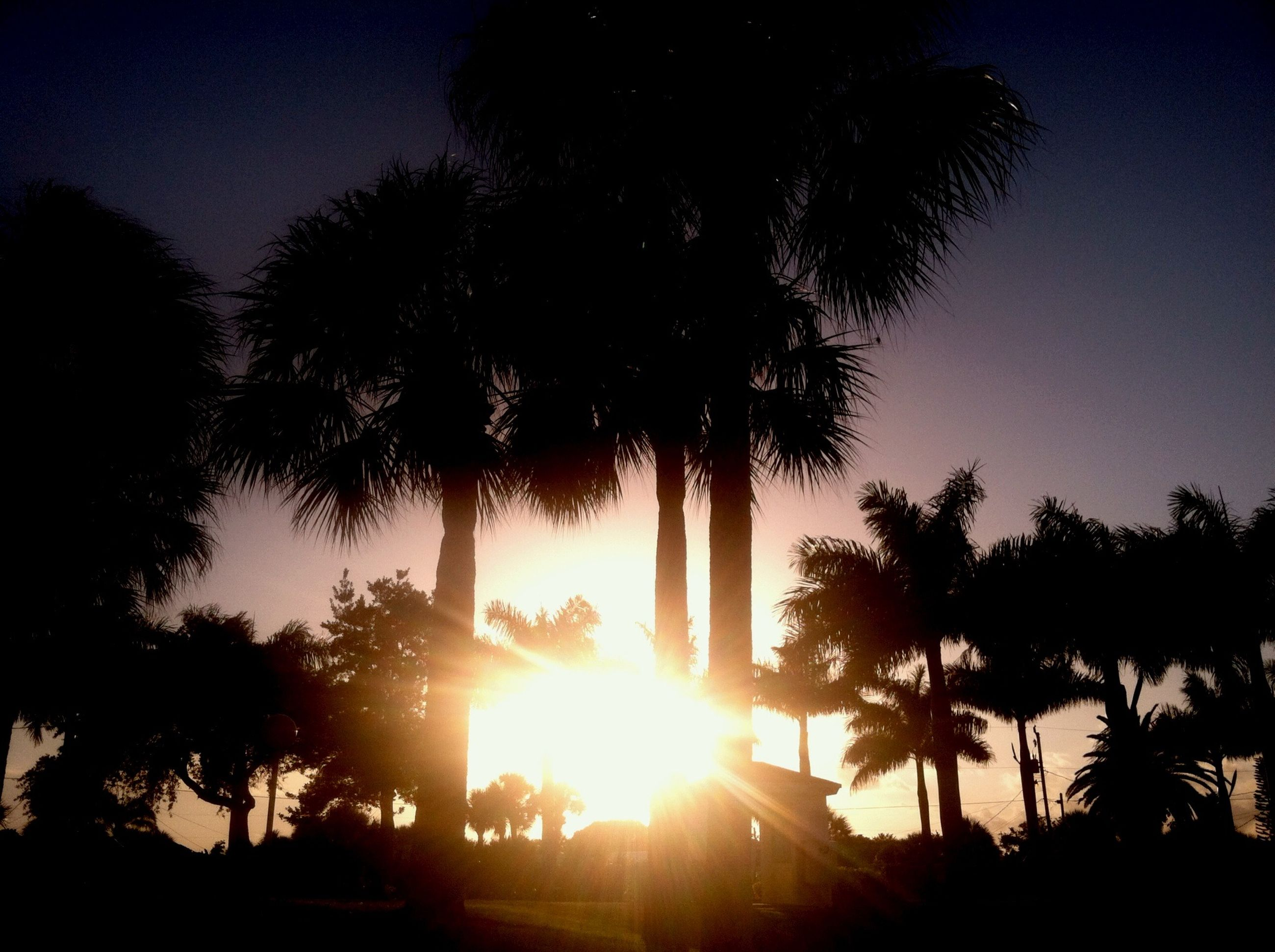 sun, tree, silhouette, sunset, sunbeam, palm tree, sunlight, tranquility, tranquil scene, beauty in nature, lens flare, scenics, nature, growth, back lit, sky, clear sky, idyllic, low angle view, no people