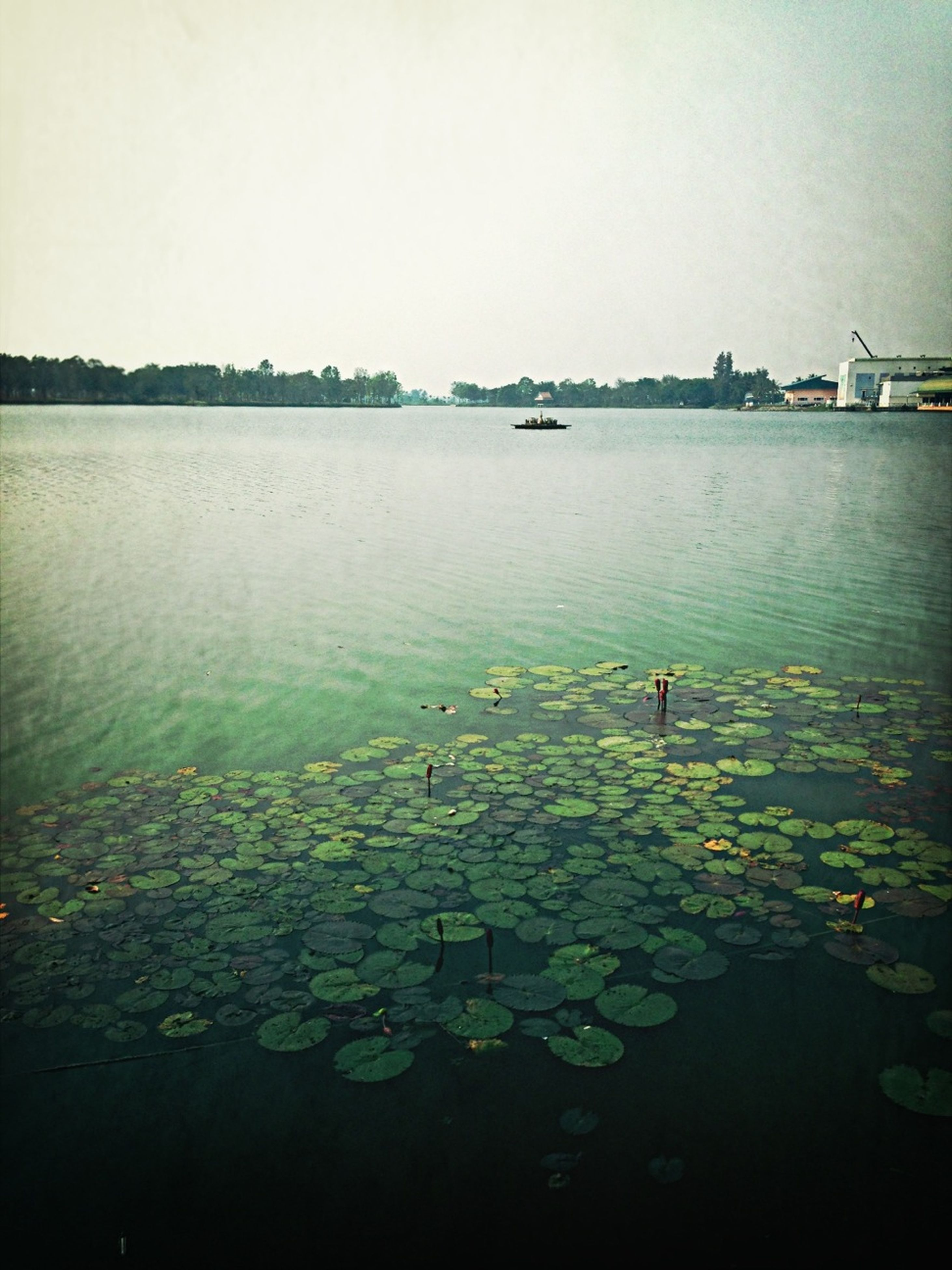 water, lake, clear sky, beauty in nature, tranquility, plant, reflection, nature, tranquil scene, copy space, growth, waterfront, scenics, flower, no people, day, river, outdoors, sea, calm