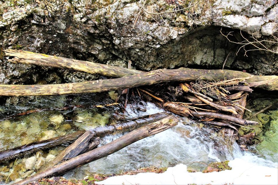 Beauty In Nature Branch Day Dead Tree Forest Growth Landscape Nature No People Outdoors Scenics Tranquility Tree Tree Trunk Water Weißbach Wood - Material