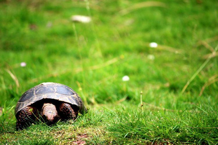 Tortoise Slow Shutter Wildlife