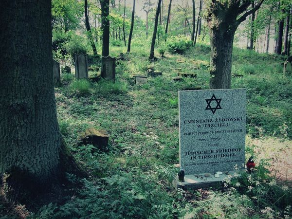 No People Cmentarz Cmentarzżydowski Cmentary Jew