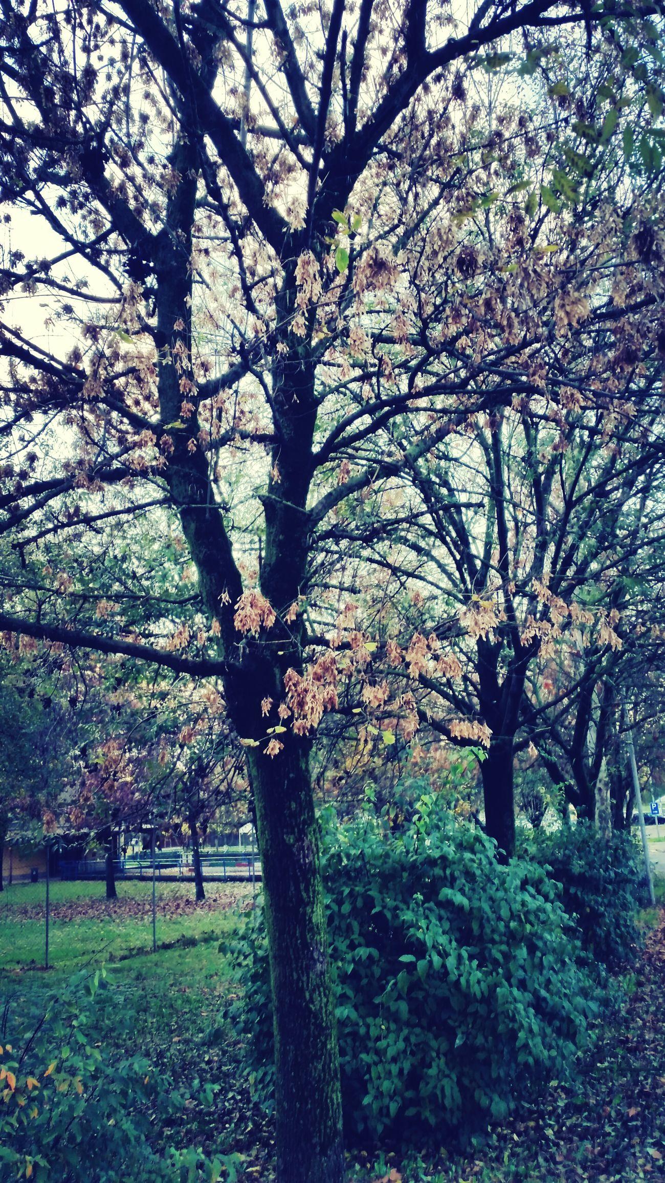 Autumn Brrrr.