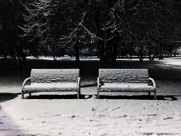 Bench Park Bench Park - Man Made Space Empty Sitting Outdoors Tree Seat Day Cold Temperature Nature No People Konrad Photographie Konrad Skroński