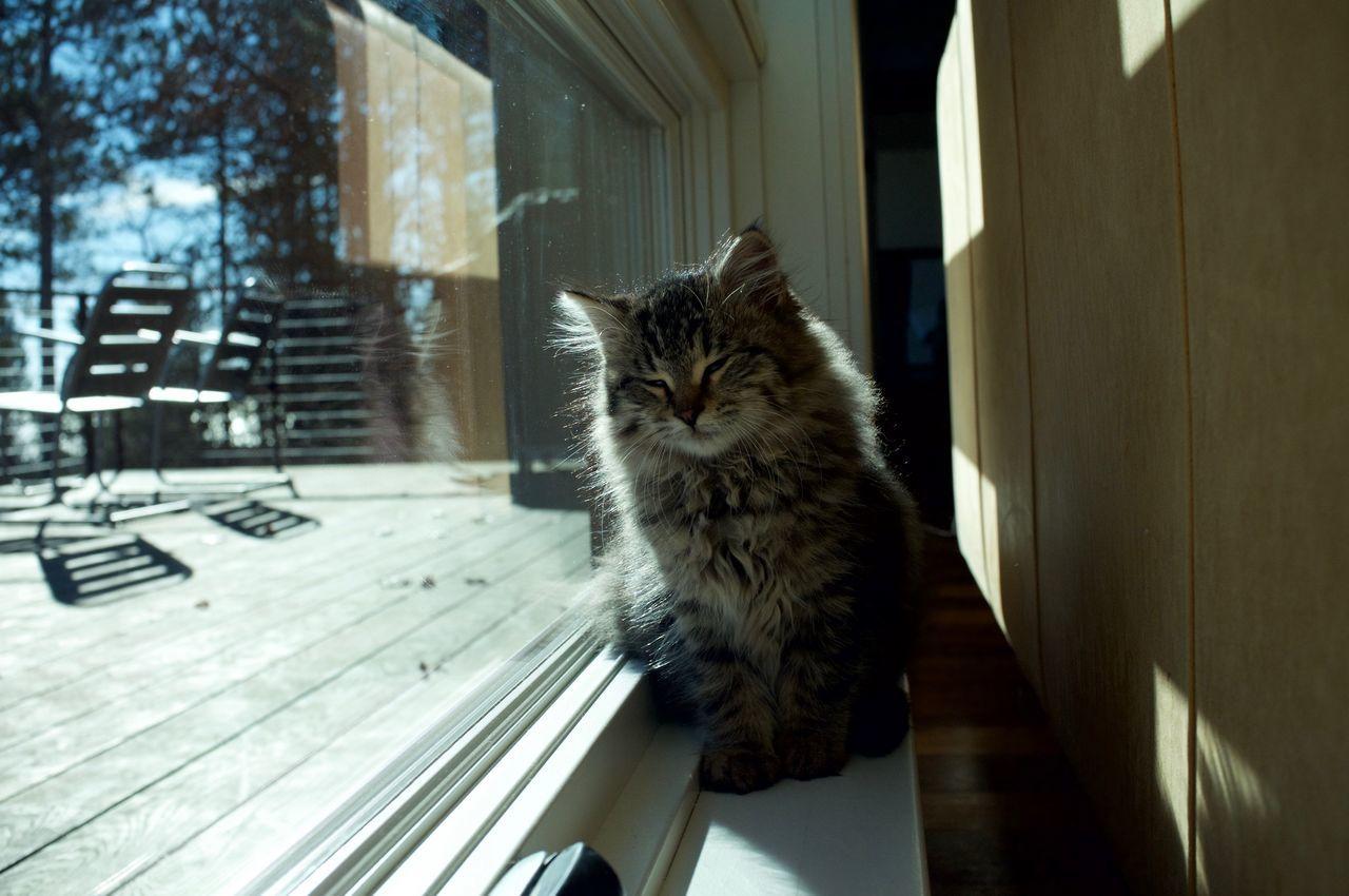 Animal Themes Cat Day Domestic Animals Domestic Cat Duluth Feline Indoors  Mammal Minnesota No People One Animal Pets