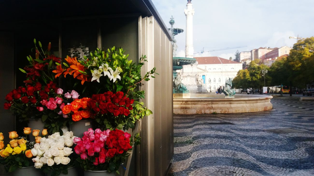 Flower Plant Architecture Outdoors Fragility Day Freshness Photography Travel Destinations Natgeo Casualphotography Casual Photography Street Streetphotography City Statue Photographer Architecture Cıty
