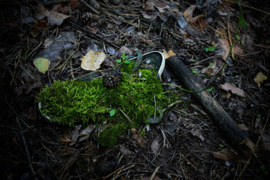 Beauty Nature Green Boot Plant Cone Find In The Wood Wood Moss Mossyforest Wood Photography Twilight Twilight Photo Old Boot