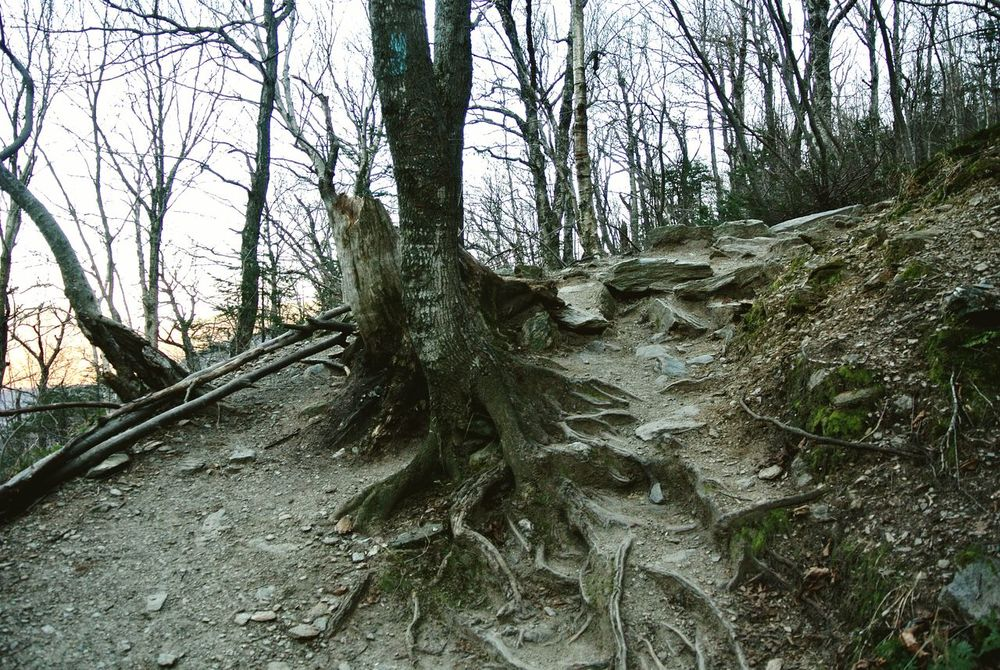 Tree Roots  Tree_collection  Hiking Trail No Leaves Bare Branches Gnarly Branches Showcase: November The Adventurer